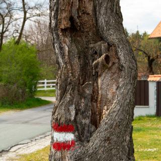 Gute Kennzeichnung an Bäumen